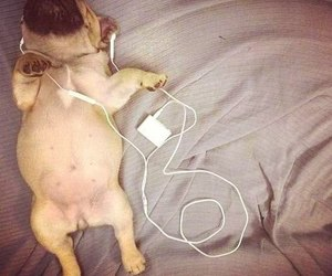dog, music, and puppy image