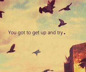 try, quote, and bird image