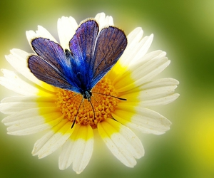 flowers, butterfly, and photography image