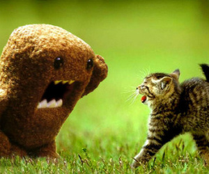 cat, domo, and funny image