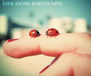 love exists everywhere image