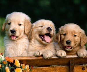 dog, puppy, and animal image