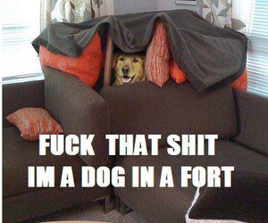 couch, dog, and fort image