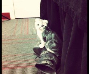 boots, cute, and cats image
