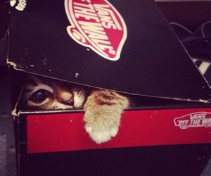 cat and vans image
