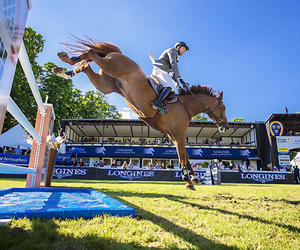 horse, riding horse, and show jumping image