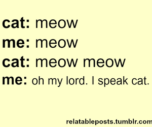 cat, meow, and funny image