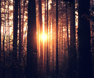 sun, tree, and forest image