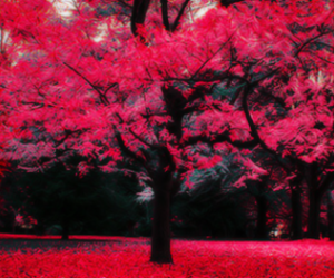 beautiful, colors, and nice image