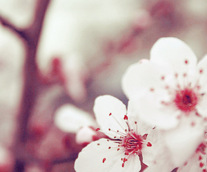 flowers, background, and picture image