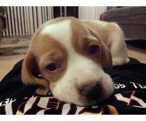 dog, Filhotes, and fofo image