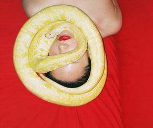 snake and red image