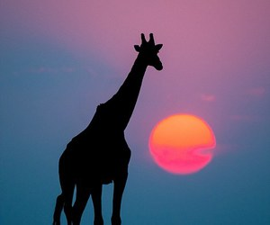animal, colors, and sunset image