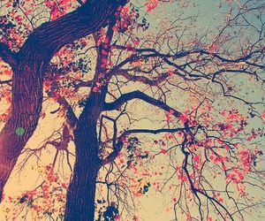 tree, nature, and flowers image