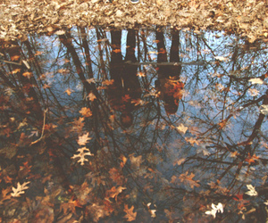 autum, puddle, and fall image