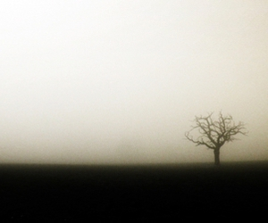 fog, horizon, and tree image