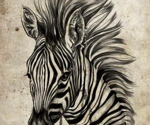 illustration, zebra, and amedee image