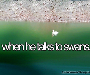 funny, swans, and justin bieber image