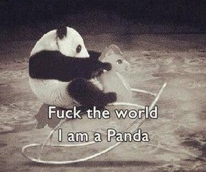 black and white, kawaii, and panda image
