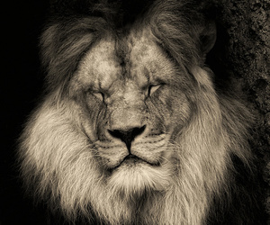 back and white, animal, and beautiful image