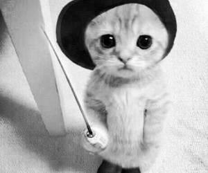 disney, kitten, and kitty image