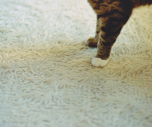 carpet, cat, and cats image