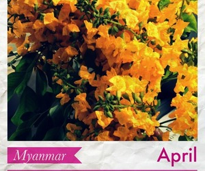 burma, myanmar, and thingyan image