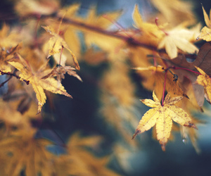autumn, blue, and brown image