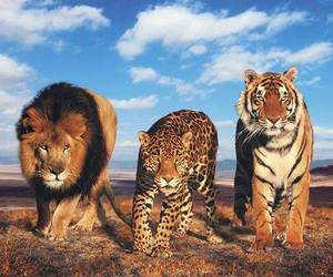 cats, lion, and leopard image