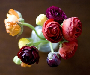 rananculus, i bought the cutest, and bundle of rananculas image