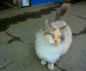 cat, funny, and fun image