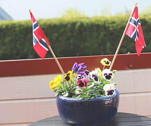 flags, flowers, and national day image