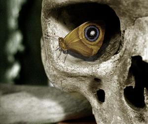 beautiful, butterfly, and skull image