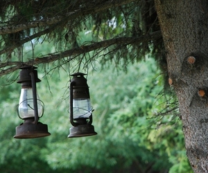 lantern, nature, and forest image