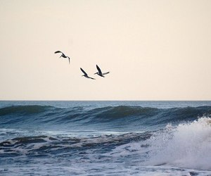 sea and birds image