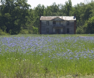 wild, blue flowers, and North Carolina image