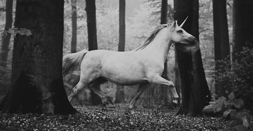 Image about unicorn in animals by priscilicious