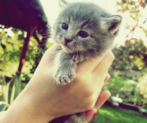 awww, kitty, and OMG image