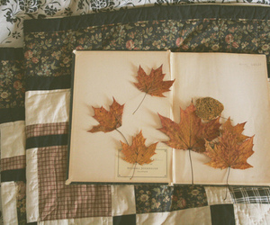 leaves, book, and vintage image