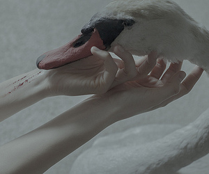 bird, hands, and pale image