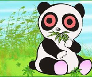 bear, pot, and drugs image