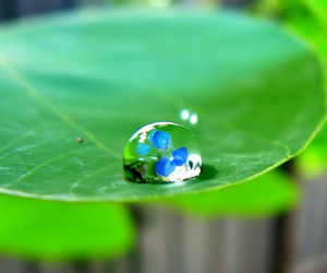 drop and water image