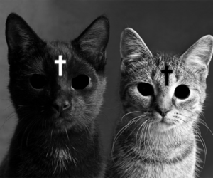 blac and white, cats, and cat image