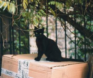 cat, black cat, and vintage image