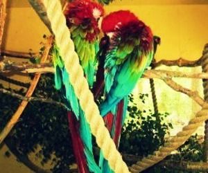 parrot and cute image
