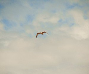 france, seagull, and sky image