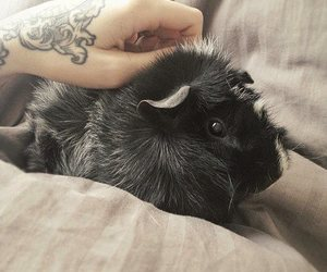 tattoo, girl, and guinea pig image