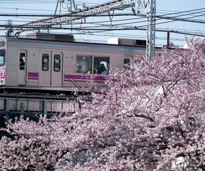 japan, train, and cherry blossom image