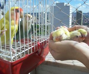 babies, baby, and baby birds image