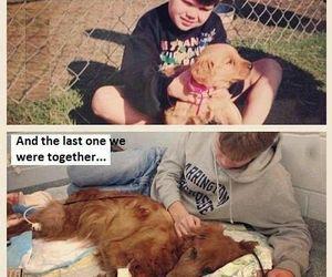 dog, boy, and sad image